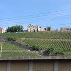 Castell Weinfest im Schlossgarten